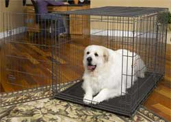 48 Inch Dog Crates midwest 1348td