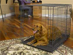 Dog Crates for Dogs 71 90 Lbs. midwest 1342td