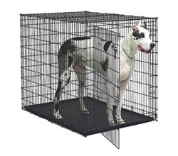 Midwest Side by Side Series Dog Crates midwest sl54dd