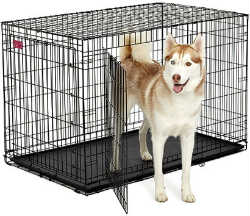 48 Inch Dog Crates midwest ace 448dd