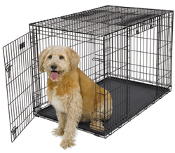 48 Inch Dog Crates midwest 1948dd
